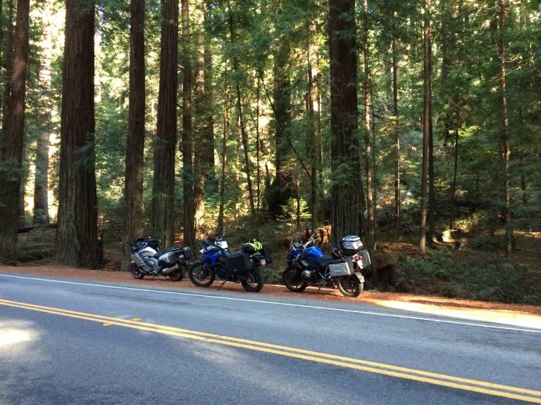 3Bikes-Redwoods
